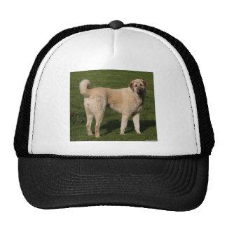 Anatolian Shepherd Dog Cap