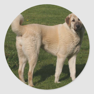 Anatolian Shepherd Dog Classic Round Sticker