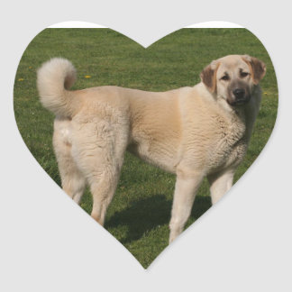 Anatolian Shepherd Dog Heart Sticker
