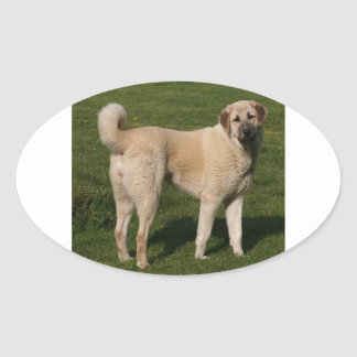 Anatolian Shepherd Dog Oval Sticker