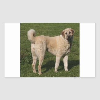 Anatolian Shepherd Dog Rectangular Sticker