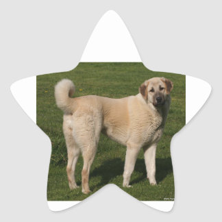 Anatolian Shepherd Dog Star Sticker