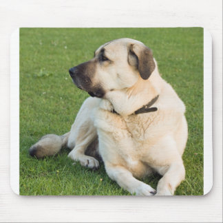 anatolian-shepherd-laying.png mouse pad