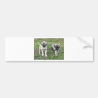 Anatolian Shepherd Puppies Dog Bumper Sticker