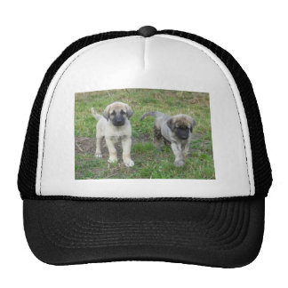 Anatolian Shepherd Puppies Dog Cap