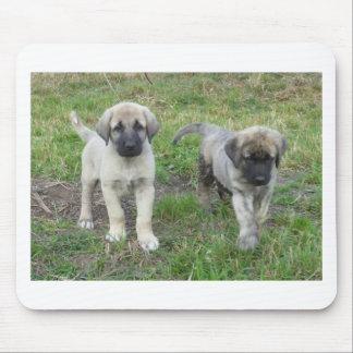 Anatolian Shepherd Puppies Dog Mouse Pad