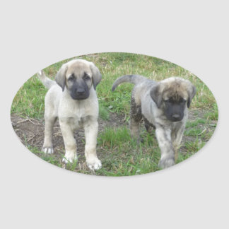 Anatolian Shepherd Puppies Dog Oval Sticker