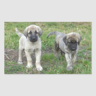 Anatolian Shepherd Puppies Dog Rectangular Sticker