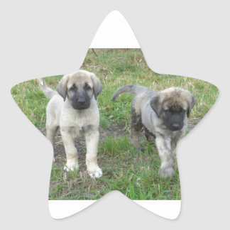 Anatolian Shepherd Puppies Dog Star Sticker