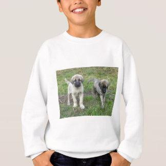 Anatolian Shepherd Puppies Dog Sweatshirt