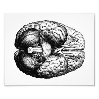 Anatomical Brain Photo Print