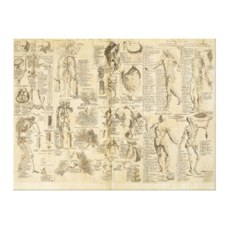 Anatomical Chart from Cyclopaedia 1728 Gallery Wrapped Canvas