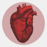 Anatomical Human Heart Sticker