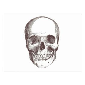 Anatomical Skull, Black/White Postcard