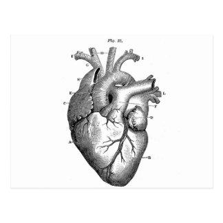 Anatomy-Heart-Images-Vintage Postcard