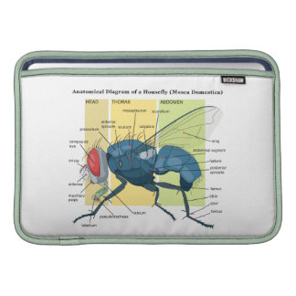 Anatomy of a Housefly Diagram Musca Domestica MacBook Air Sleeve
