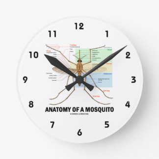 Anatomy Of A Mosquito (Entomology) Round Clock