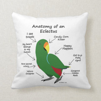 Anatomy of an Eclectus Pillow