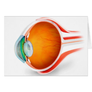 Anatomy Of Human Eye, Perspective Cards