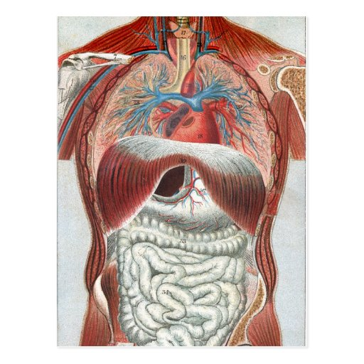 Anatomy of the Human Body Post Card