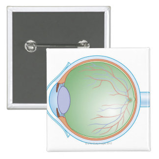 Anatomy of the Human Eye 15 Cm Square Badge