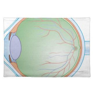 Anatomy of the Human Eye Place Mat