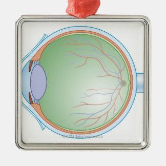Anatomy of the Human Eye Christmas Ornaments