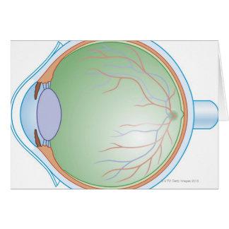 Anatomy of the Human Eye Greeting Card