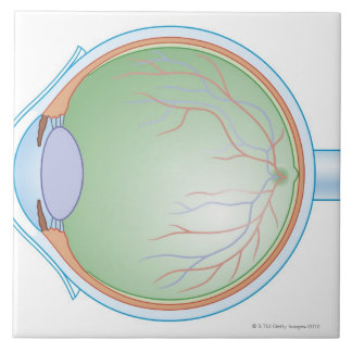 Anatomy of the Human Eye Large Square Tile