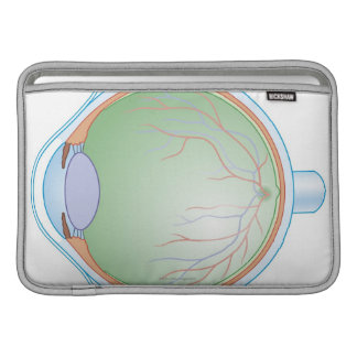 Anatomy of the Human Eye MacBook Sleeves
