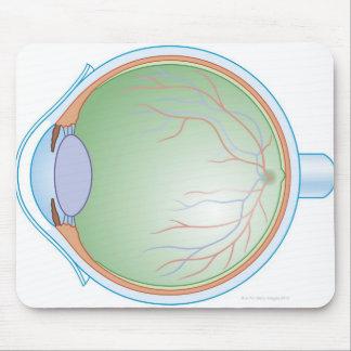 Anatomy of the Human Eye Mousepad