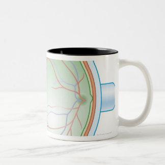 Anatomy of the Human Eye Coffee Mugs