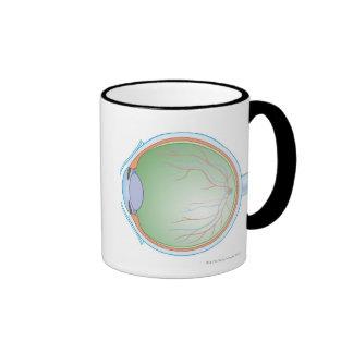 Anatomy of the Human Eye Mugs