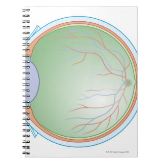 Anatomy of the Human Eye Note Book