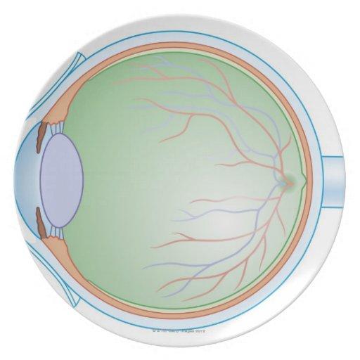 Anatomy of the Human Eye Plates