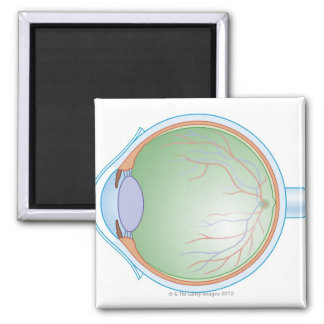 Anatomy of the Human Eye Square Magnet