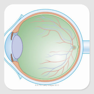 Anatomy of the Human Eye Square Sticker