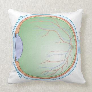 Anatomy of the Human Eye Throw Cushions