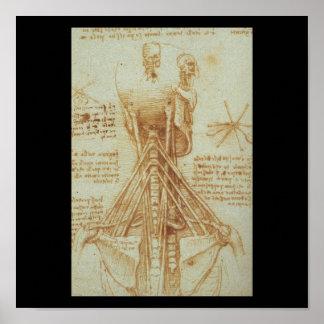 Anatomy of the Neck by Leonardo Da Vinci c. 1515 Poster