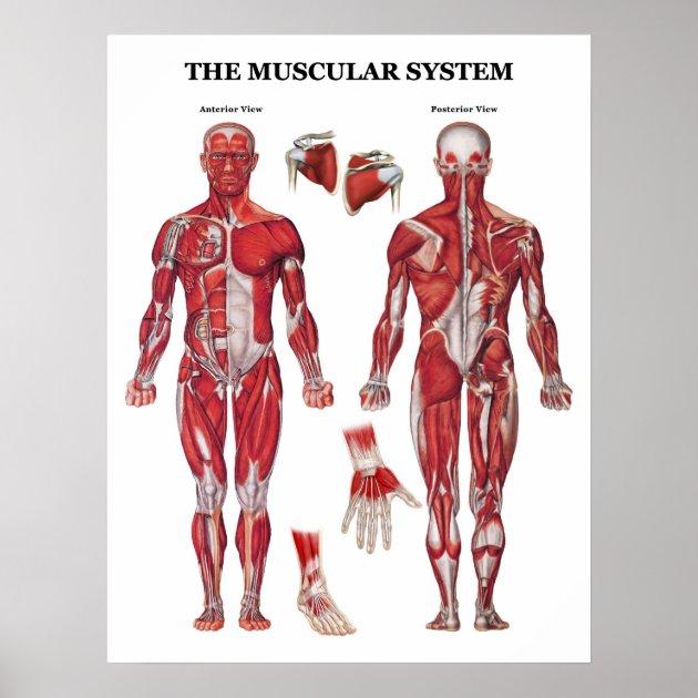 Funny Anatomy Posters Picsbud
