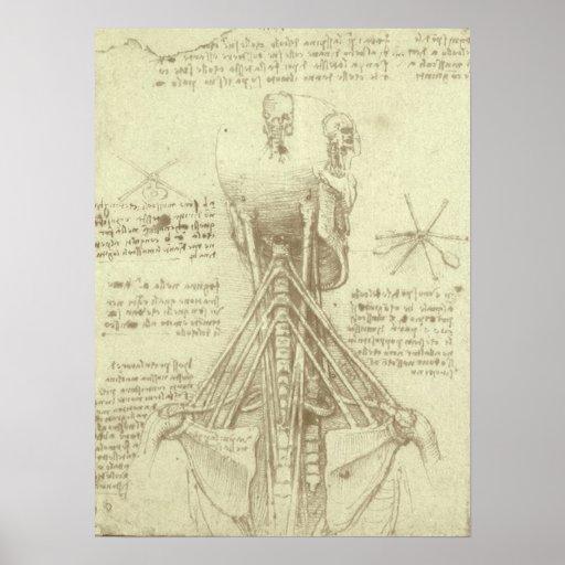 Anatomy Sketch of Spinal Column Leonardo da Vinci Poster