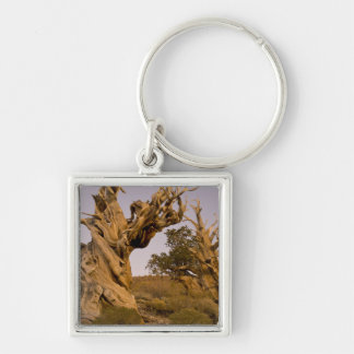 Ancient Bristlecone Forest, White Mountains, CA Silver-Colored Square Key Ring