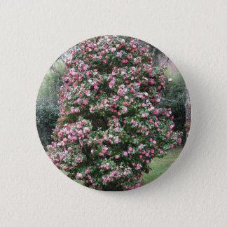 Ancient cultivar of Camellia japonica flower 6 Cm Round Badge