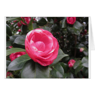 Ancient cultivar of Camellia japonica flower Card