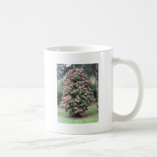 Ancient cultivar of Camellia japonica flower Coffee Mug