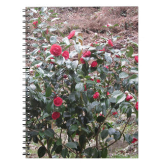 Ancient cultivar of Camellia japonica flower Notebook