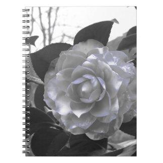 Ancient cultivar of Camellia japonica flower Notebook