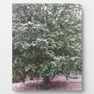 Ancient cultivar of Camellia japonica flower Plaque
