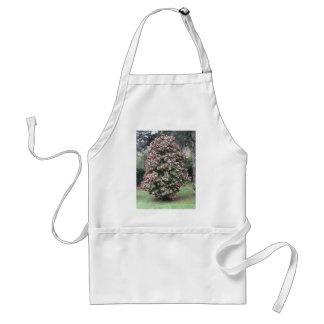 Ancient cultivar of Camellia japonica flower Standard Apron