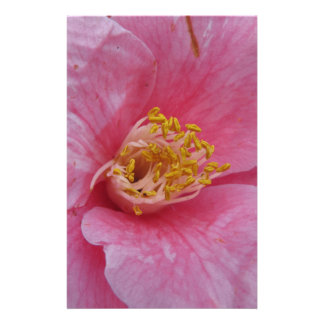 Ancient cultivar of Camellia japonica flower Stationery